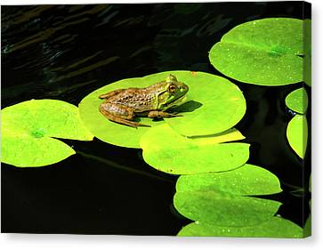 Blending In Canvas Print by Greg Fortier