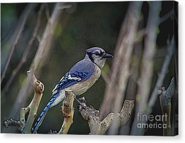 Blue Bird Of Happiness Canvas Print