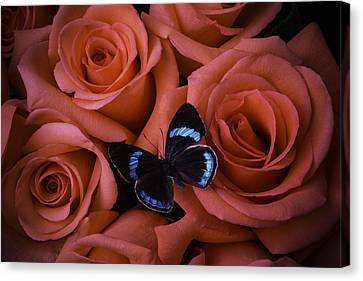 Blue Black Butterfly Canvas Print by Garry Gay