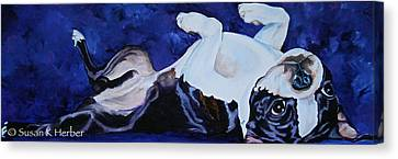 Boston Terrier Animals Acrylic Dog Portraits Pet Portraits Animal Portraits Canvas Print - Blue Boston by Susan Herber