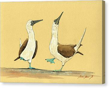 Blue Footed Boobies Canvas Print by Juan  Bosco