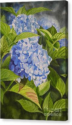 Blue Hydrangea Canvas Print by Sharon Freeman