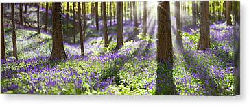 Bluebell Spring Wildflowers Canvas Print by Dirk Ercken