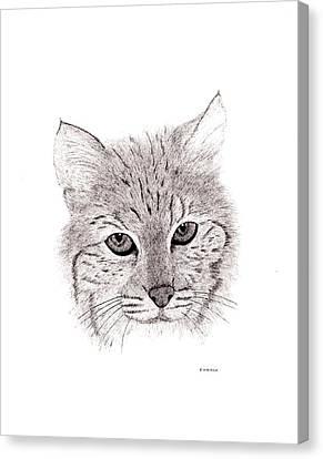 Bobcat Canvas Print by Ed Einboden