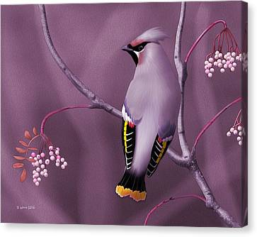 Bohemian Waxwing Canvas Print by John Wills