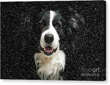 Border Canvas Print - Border Collie by Nichola Denny