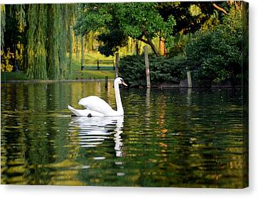Boston Public Garden Swan Green Reflection Canvas Print by Toby McGuire