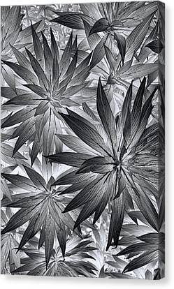 Canvas Print featuring the photograph Botanical by Wayne Sherriff