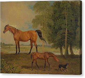 Broodmare With Foal, And A Terrier Canvas Print by Benjamin Marshall