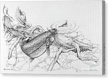 Canvas Print - Brown Trout Pencil Study by Jon Q Wright