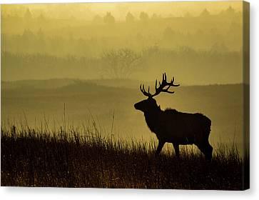 Bull Elk Canvas Print by Jay Stockhaus
