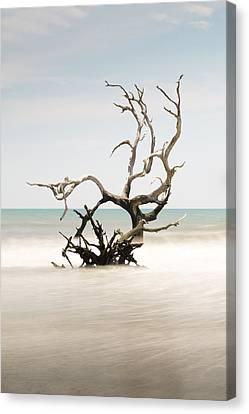 South Carolina Canvas Print - Bulls Island C-vi by Ivo Kerssemakers
