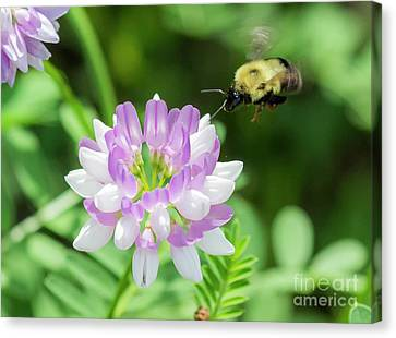 Bumble Bee Pollinating A Flower Canvas Print by Ricky L Jones
