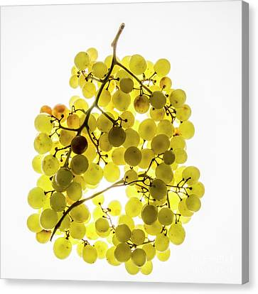White Grapes Canvas Print - Bunch Of White Grapes by Bernard Jaubert