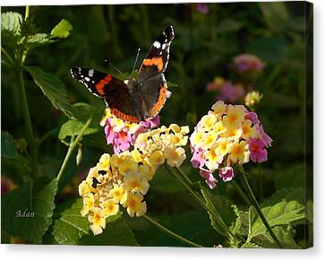 Canvas Print featuring the photograph Busy Butterfly Side 2 by Felipe Adan Lerma