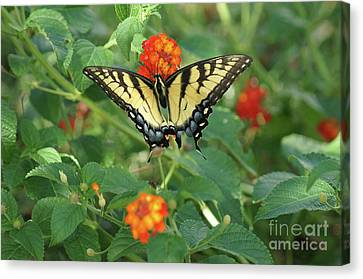 Butterfly And Flower Canvas Print by Debra Crank