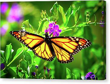 Butterfly Garden Canvas Print by Mark Andrew Thomas