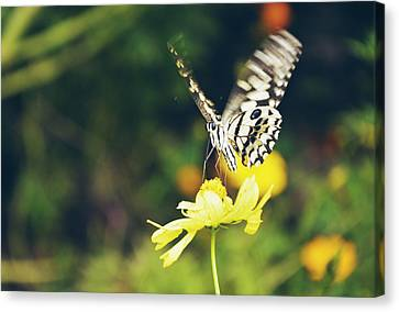 Butterfly In Motion Canvas Print - Butterfly On Flower by Nguyen Truc