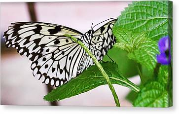 Paper Kite Butterfly No. 1 Canvas Print