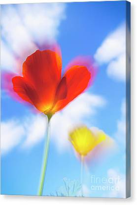 California Poppies Canvas Print by Veikko Suikkanen