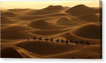 Camel Caravan In The Erg Chebbi Southern Morocco Canvas Print