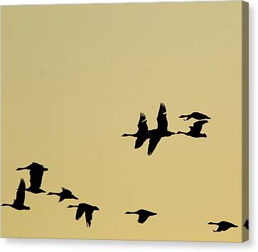 Canada Geese In Flight Canvas Print by Marty Timmerman