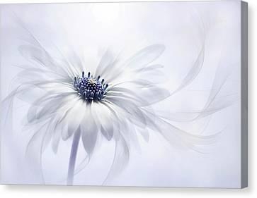Close Focus Floral Canvas Print - Cape Daisy by Jacky Parker