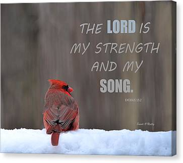 Cardinal In The Snowstorm With Scripture Canvas Print by Sandi OReilly