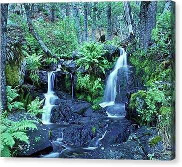 Cascade Creek And Ferns  Canvas Print