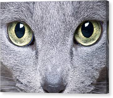 Cat Eyes Canvas Print by Nailia Schwarz