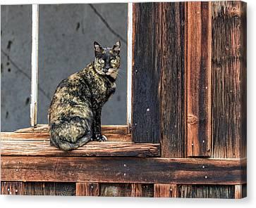 Cat In A Window Canvas Print