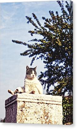 cats of Ephesus Canvas Print by HD Connelly