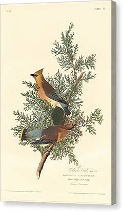 Wings Canvas Print - Cedar Bird by Dreyer Wildlife Print Collections