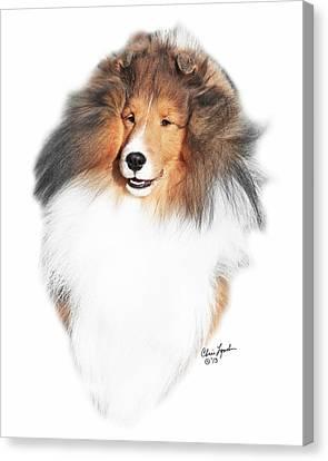 Shetland Sheepdog Canvas Print - Ch Paray's Ka-3 by Chris Lynch