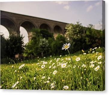 Chappel Viaduct Canvas Print by Martin Newman