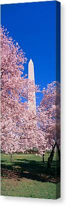 Cherry Blossoms And Washington Canvas Print