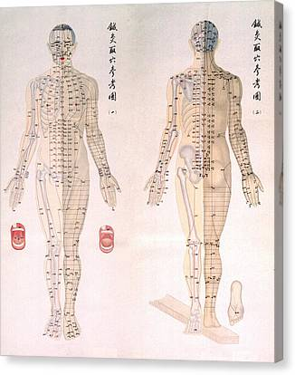 Medicine Canvas Print - Chinese Chart Of Acupuncture Points by Everett