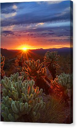 Cholla Sunset  Canvas Print