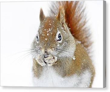 Christmas Squirrel Canvas Print by Mircea Costina