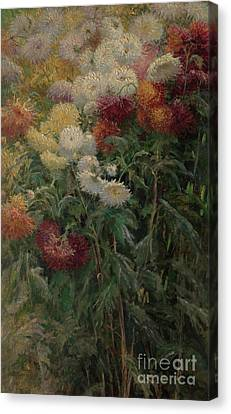Gennevilliers Canvas Print - Chrysanthemums In The Garden At Petit-gennevilliers by Gustave Caillebotte