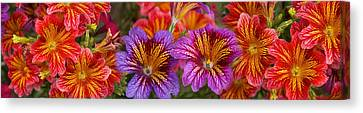 Close-up Of Flowers In Bloom Canvas Print by Panoramic Images