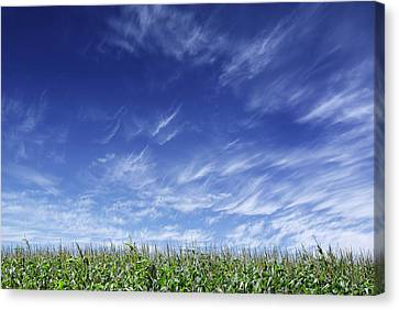 Clouds Over Cornfield Canvas Print