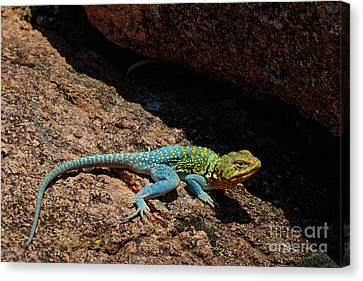 Colorful Lizard II Canvas Print