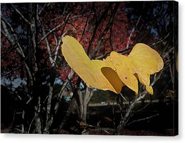 Colors Of Fall Canvas Print by Joseph G Holland