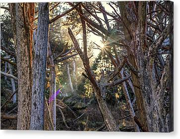 Coming Through Canvas Print by Joseph S Giacalone