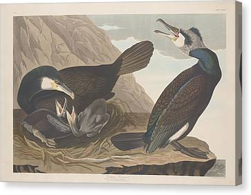 Mountain Canvas Print - Common Cormorant by Dreyer Wildlife Print Collections