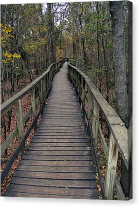 Congaree Swamp Canvas Print by Skip Willits