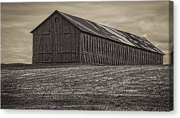 Connecticut Tobacco Barn Canvas Print by Phil Cardamone