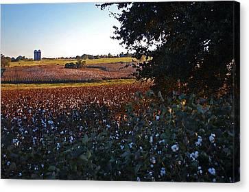 Cotton Farm Canvas Print - Cotton And The 2 Silos by Michael Thomas