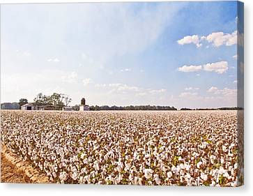 Cotton Field Canvas Print by Scott Pellegrin